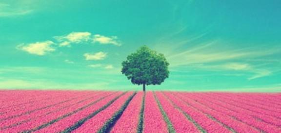 從前,在一座山頂上,有三棵小樹在那裡落地生根,夢想著長成大樹的模樣。 第一棵小樹抬頭仰望著星星說:「我想要擁有寶藏,我要 […]