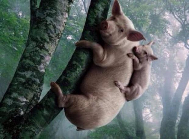 pig clam tree